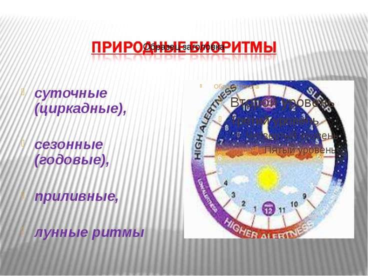 суточные (циркадные), сезонные (годовые), приливные, лунные ритмы