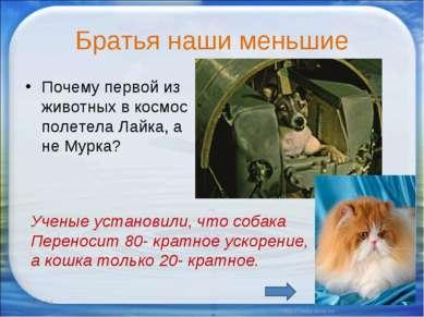 Братья наши меньшие Почему первой из животных в космос полетела Лайка, а не М...