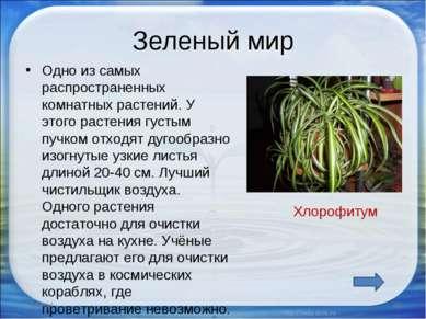 Зеленый мир Одно из самых распространенных комнатных растений. У этого растен...