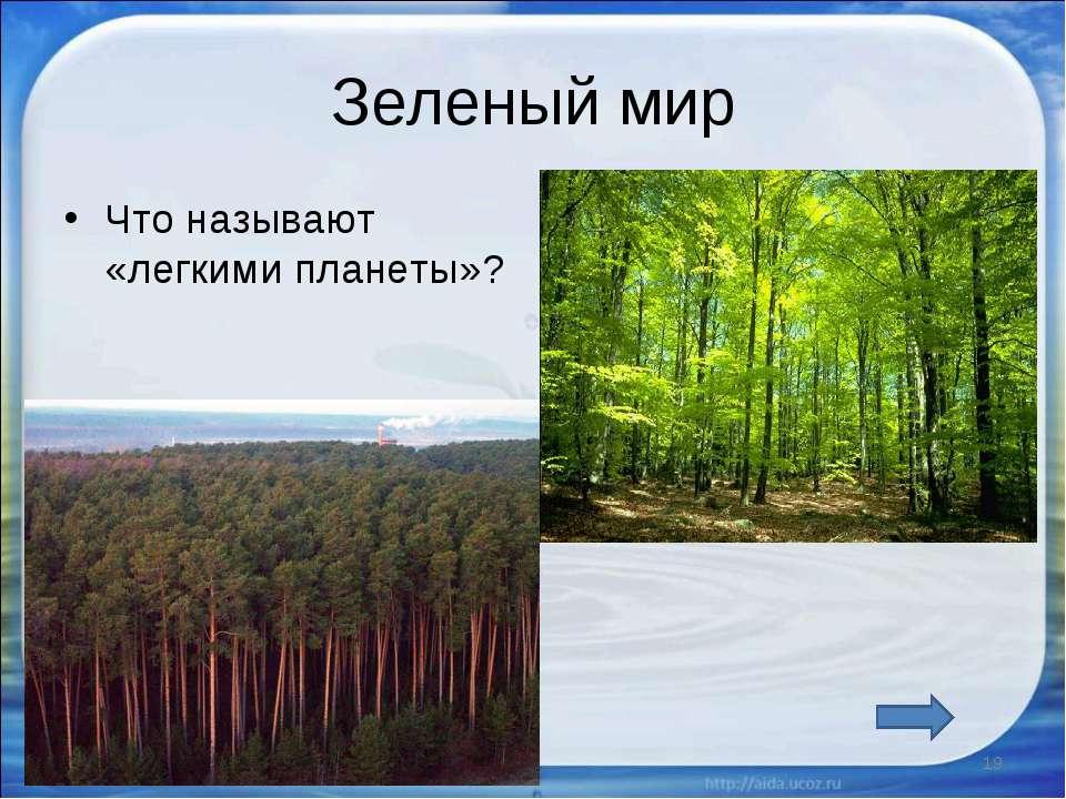 Зеленый мир Что называют «легкими планеты»? * *