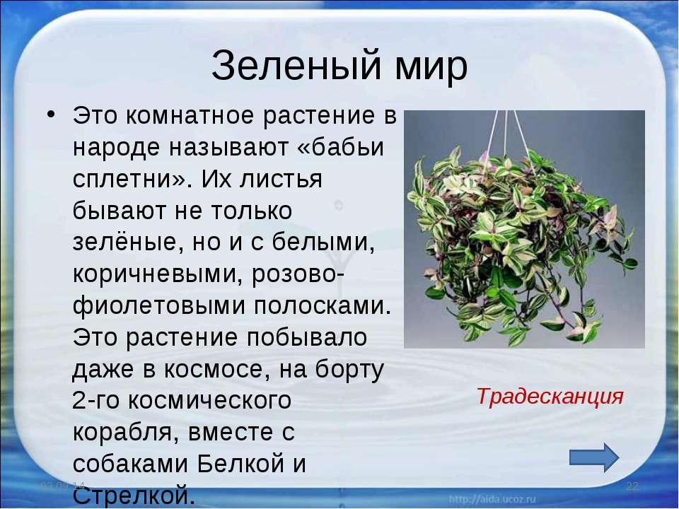 Зеленый мир Это комнатное растение в народе называют «бабьи сплетни». Их лист...