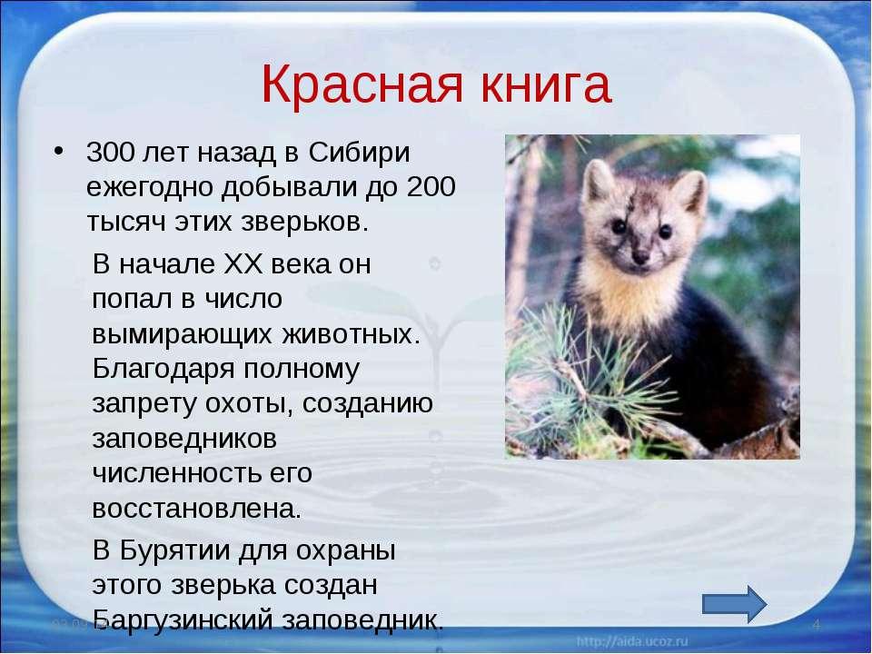 Красная книга 300 лет назад в Сибири ежегодно добывали до 200 тысяч этих звер...