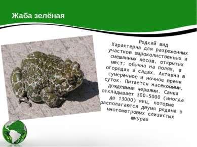 Жаба зелёная Редкий вид Характерна для разреженных участков широколиственных ...