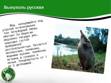Выхухоль русская Вид, находящийся под угрозой исчезновения Как полуводный зве...