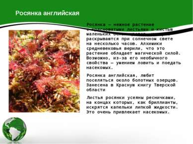 Росянка английская Росянка— нежное растение скрасноватыми листьями икистью...