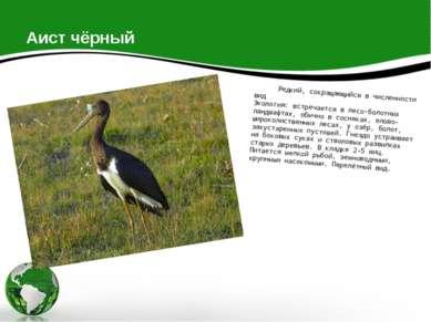 Аист чёрный Редкий, сокращающийся в численности вид Экология: встречается в л...