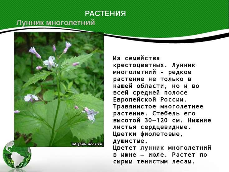 Из семейства крестоцветных. Лунник многолетний - редкое растение не только в ...
