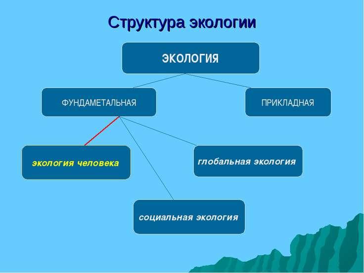 Структура экологии ЭКОЛОГИЯ ФУНДАМЕТАЛЬНАЯ ПРИКЛАДНАЯ экология человека социа...