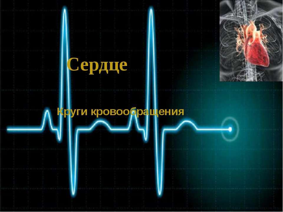Сердце Круги кровообращения