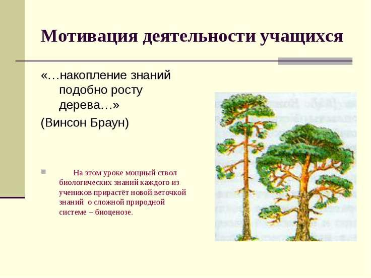 Мотивация деятельности учащихся «…накопление знаний подобно росту дерева…» (В...