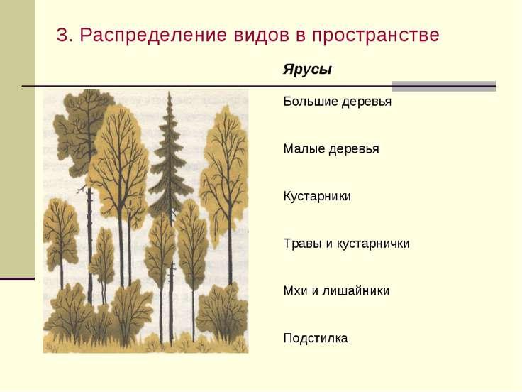 3. Распределение видов в пространстве 3. Пространственная структура сообществ...