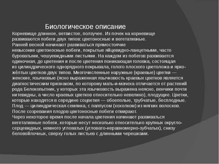 Биологическое описание Корневищедлинное, ветвистое, ползучее. Из почек на ко...