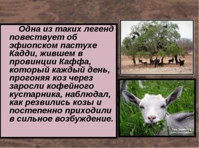 Одна из таких легенд повествует об эфиопском пастухе Кадди, жившем в провинци...