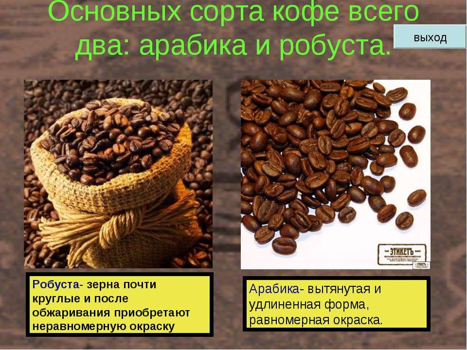 Основных сорта кофе всего два: арабика и робуста. Робуста- зерна почти круглы...