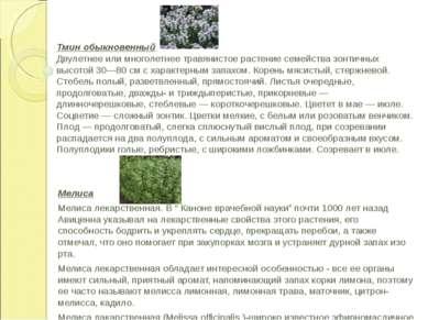 Тмин обыкновенный Двулетнее или многолетнее травянистое растение семейства зо...