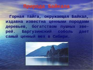 Природа Байкала Горная тайга, окружающая Байкал, издавна известна ценными пор...