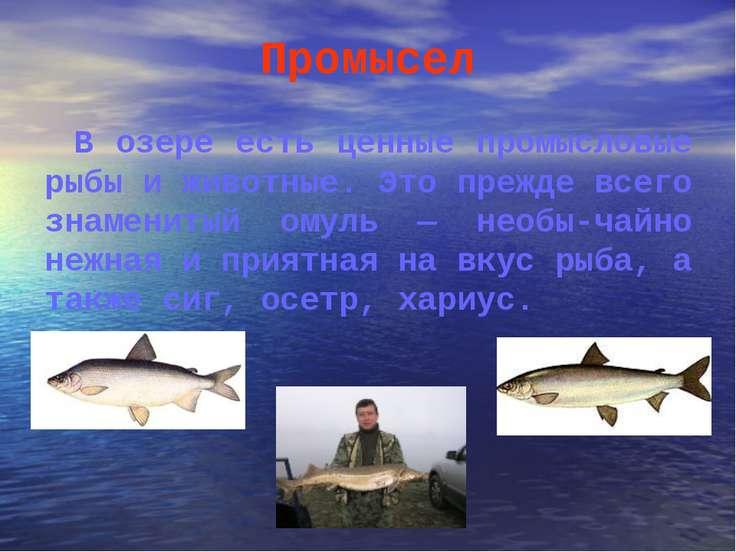 Промысел В озере есть ценные промысловые рыбы и животные. Это прежде всего зн...
