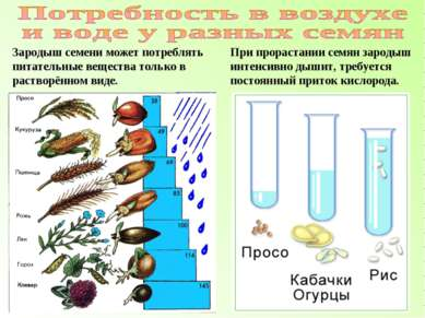 Зародыш семени может потреблять питательные вещества только в растворённом ви...