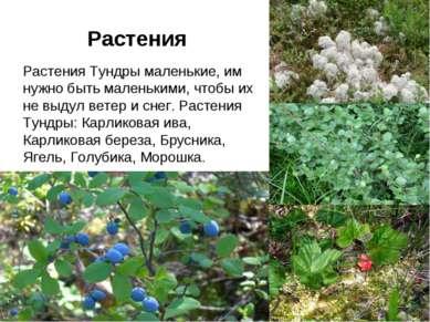 Растения Растения Растения Тундры маленькие, им нужно быть маленькими, чтобы ...