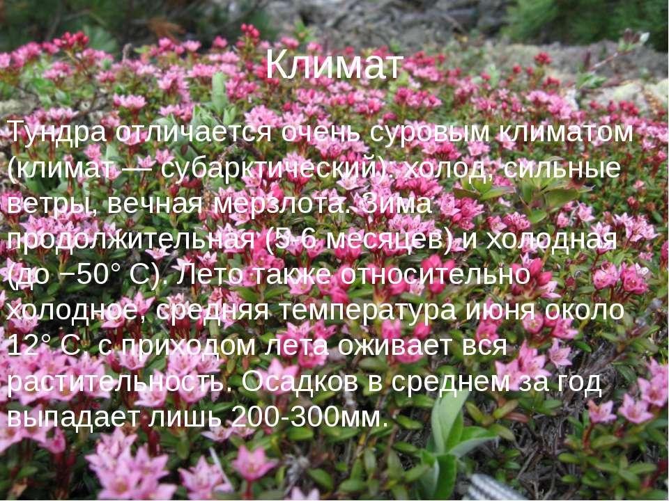 Климат Тундра отличается очень суровым климатом (климат — субарктический): хо...